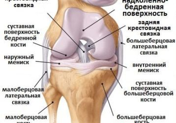 Лечение коленного сустава: основные болезни и методы терапии