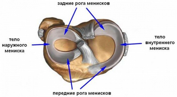 Мениски колена