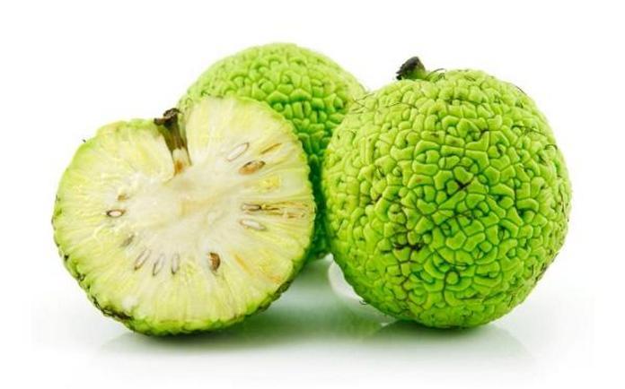 Адамово яблоко в народной медицине применение в лечении суставов
