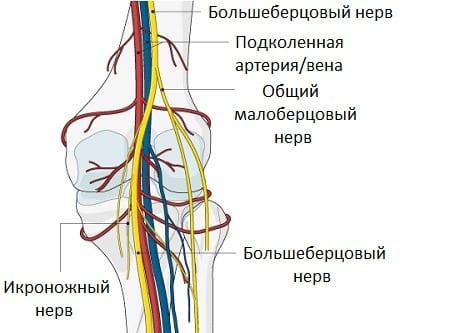 Изображение - Сустав колена болит сбоку %D0%BD%D0%B5%D1%80%D0%B2
