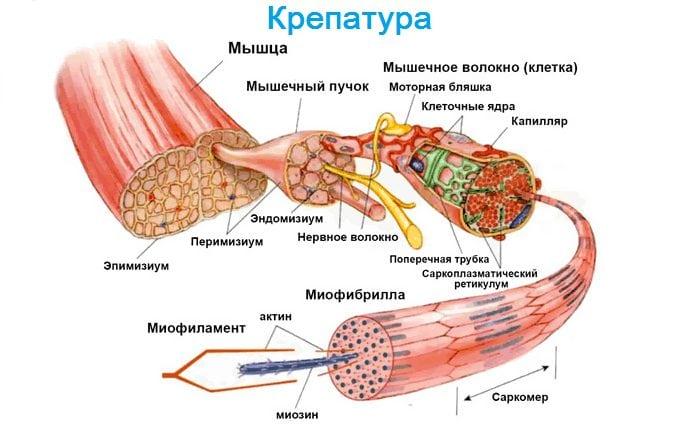 Изображение - Артрит боли в суставах и мышцах Boli-v-myshcah-i-sustavah