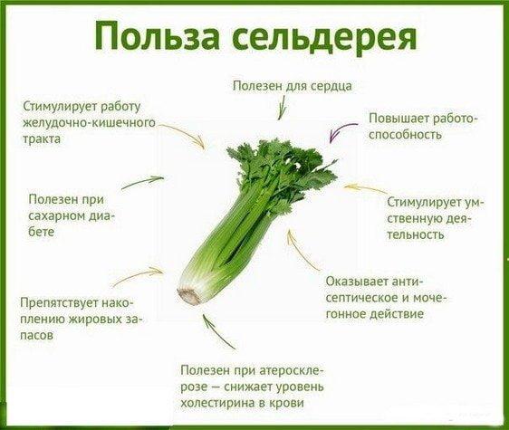Польза сельдеря