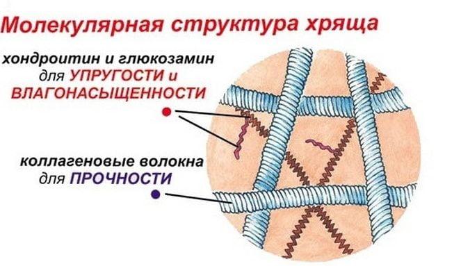 Молекулярная структура ткани хряща