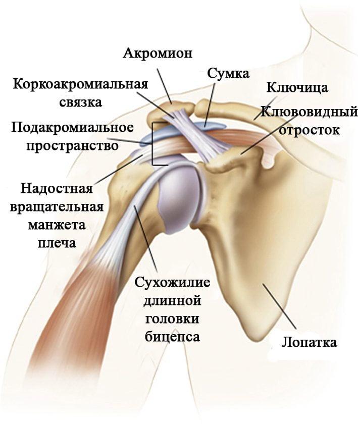 Упражнения при плечелопаточном периартрите полный комплекс