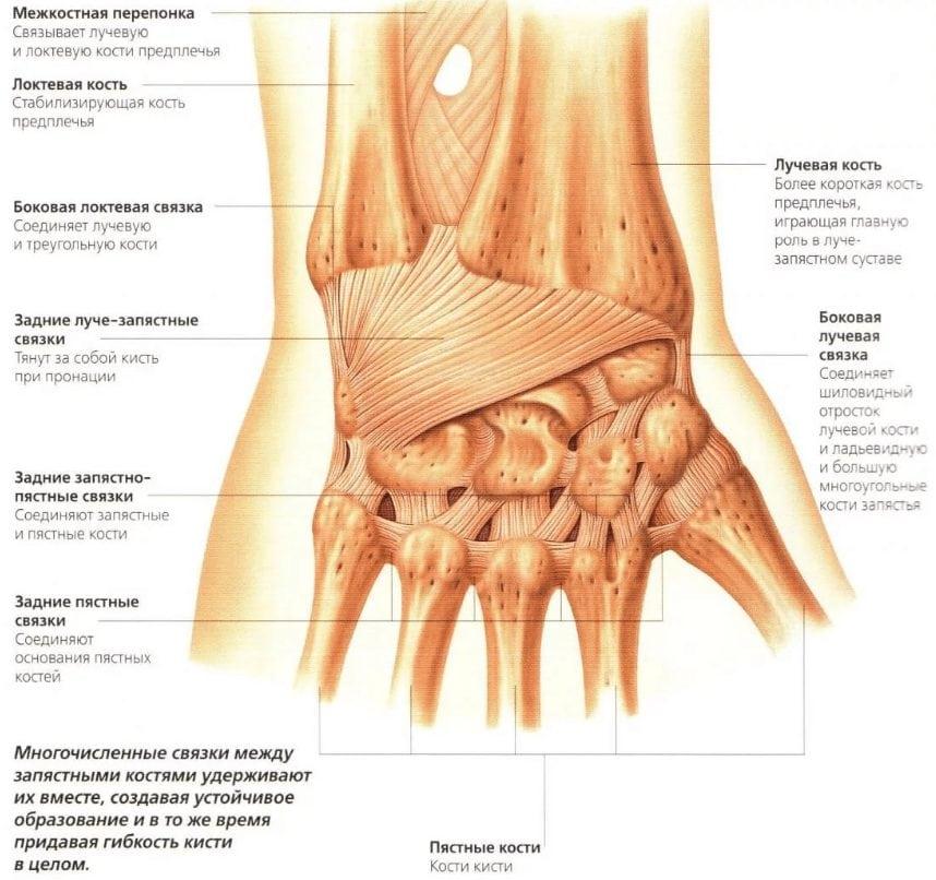 Изображение - Воспаление лучезапястного сустава лечение 2017-10-23-16.10.36