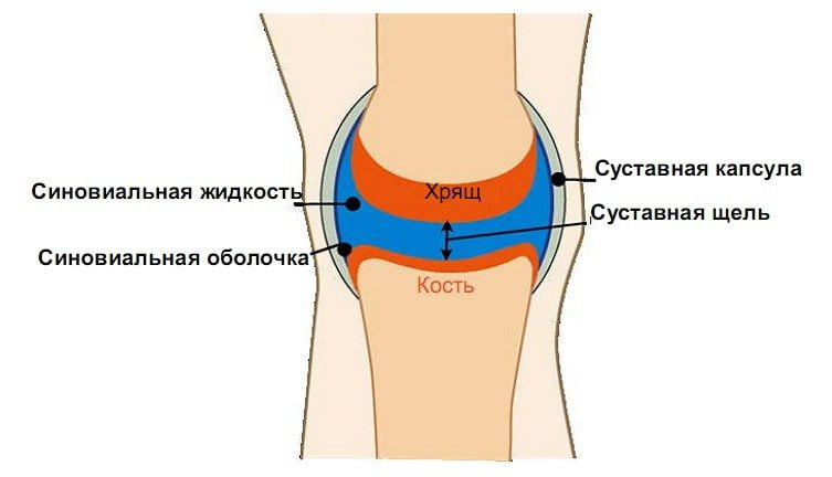 Почему скапливается жидкость в коленном суставе