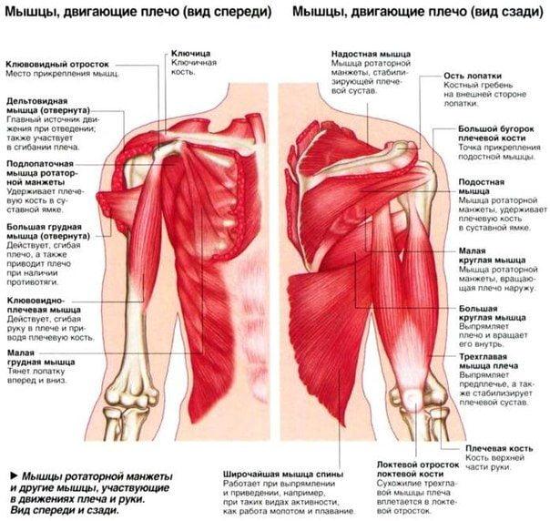 Вылечить боль плечевом суставе