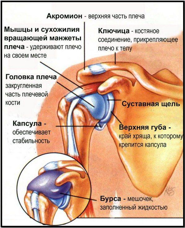 Лфк при остеоартрозе плечевого сустава с выраженным болевым суставом
