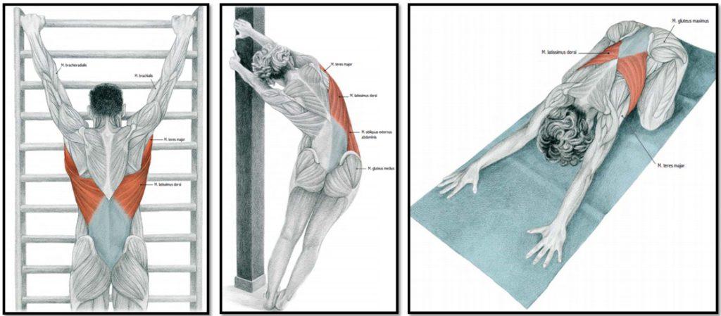 Упражнения для растяжки спины и позвоночника при остеохондрозе