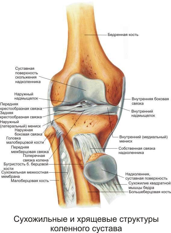 Болезни суставов коленей их симптомы и эффективное лечение