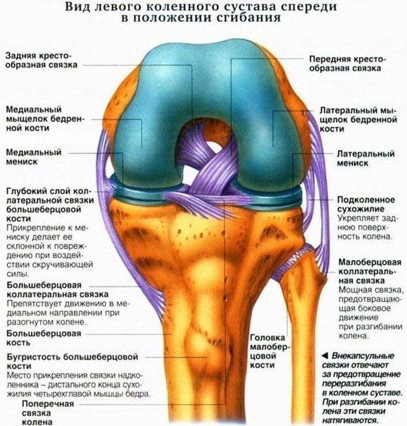Связки коленного сустава лечение в домашних условиях