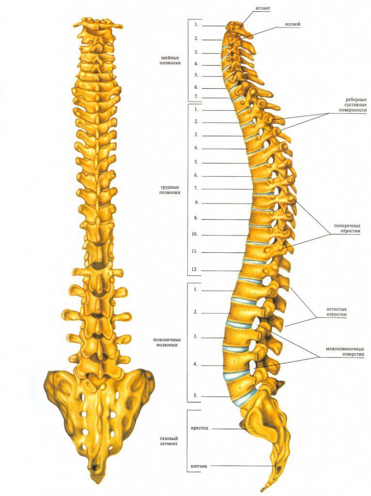 Что такое остеоартроз периферических суставов и позвоночника и способы лечения