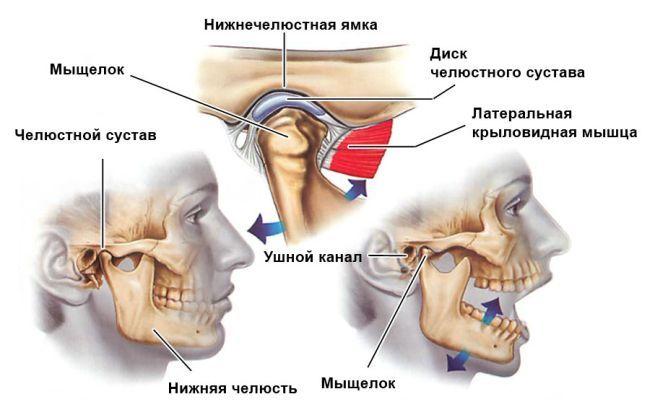 Боль в челюсти: причины, симптомы, лечение, последствия, риски, профилактика, опасность, почему возникает, нужно ли к врачу, что делать?