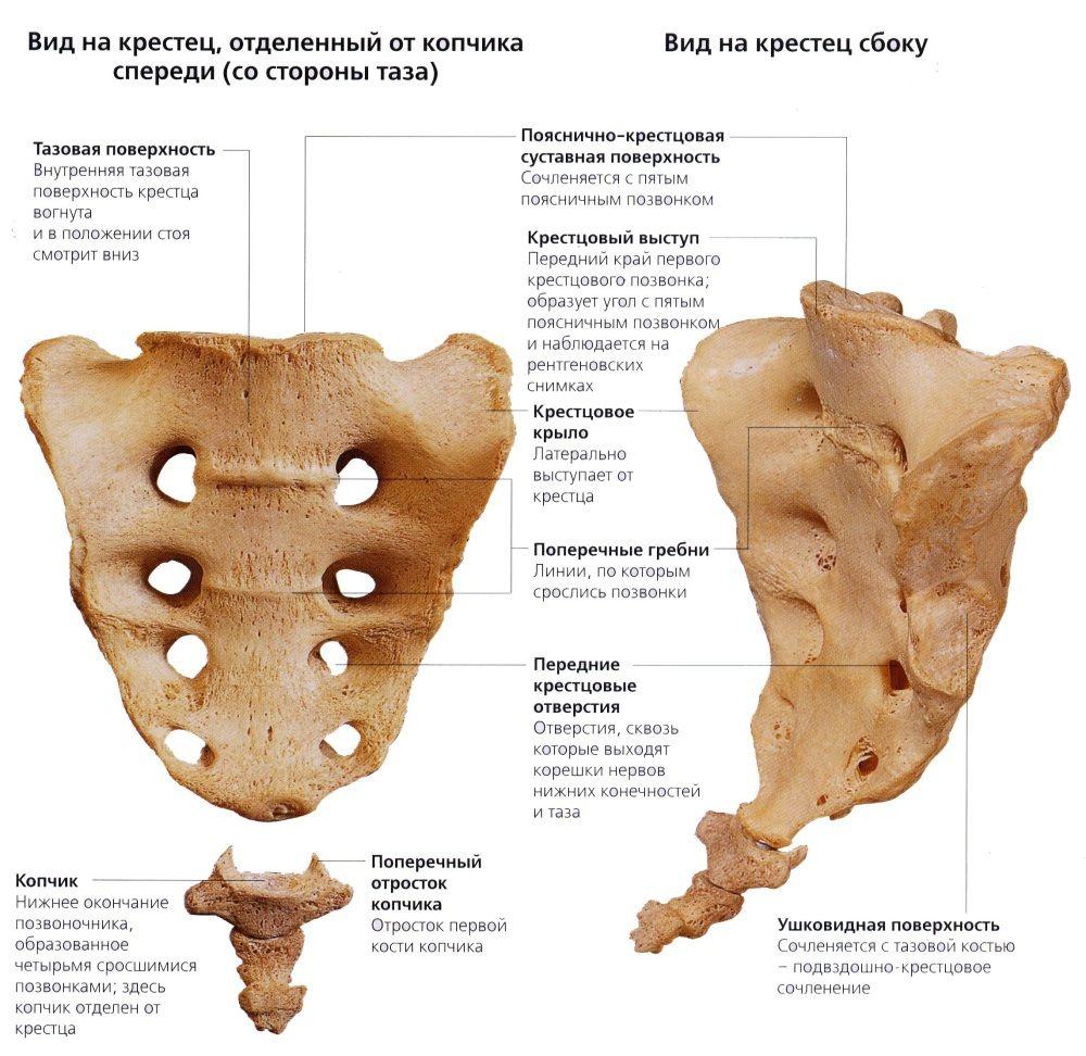 Причины болей в спине у женщин слева