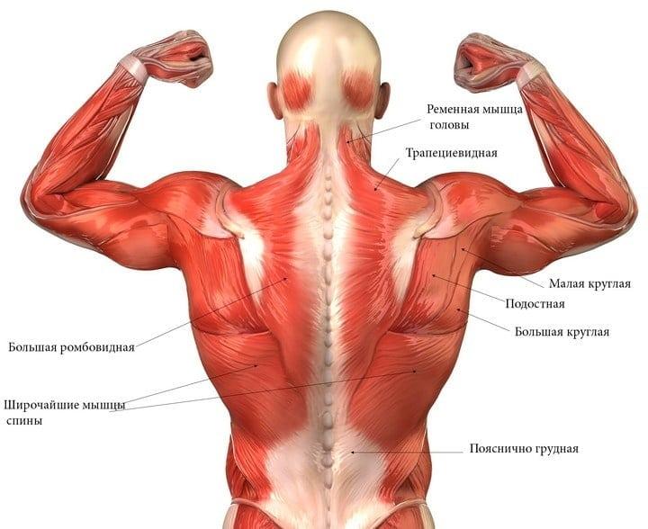 Гимнастика для плечевого сустава по дикулю