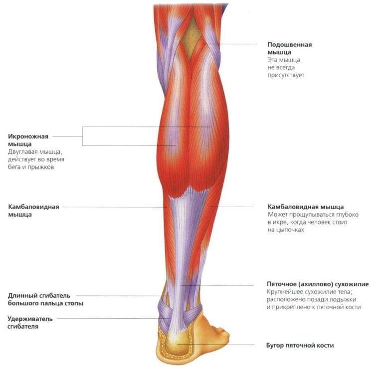Растяжение ушиб разрыв икроножной мышцы симптомы и лечение