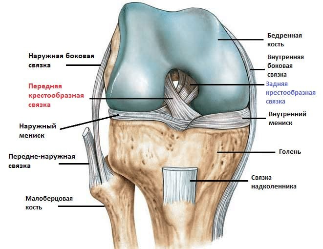 Задняя крестообразная связка коленного сустава повреждение