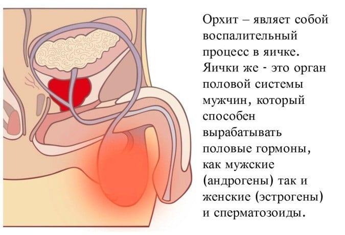 Могут ли болеть яйца у мужчин от простатита клизмы из чистотела от простатита